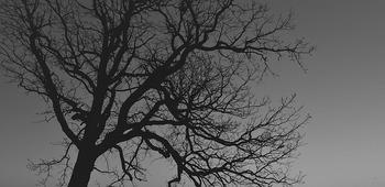 tree-280126_640.jpg